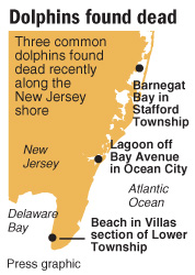 Dolphin map