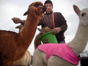 ALPACA RANCH