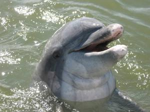 Bottlenose dolphins extending their season off New Jersey