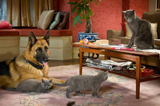 'Cats & Dogs' gets the 3-D treatment