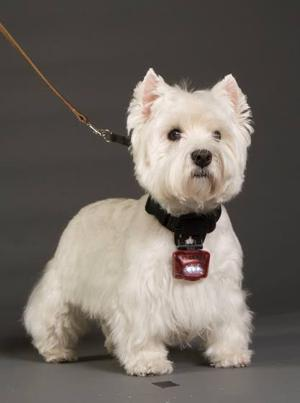 Dog-collar light inventor now selling to government