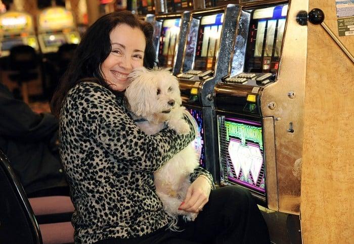 Casino dogs