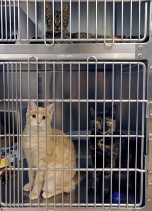animal cruelty5075276.jpg