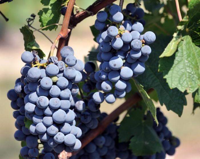 new jersey wine4951932.jpg