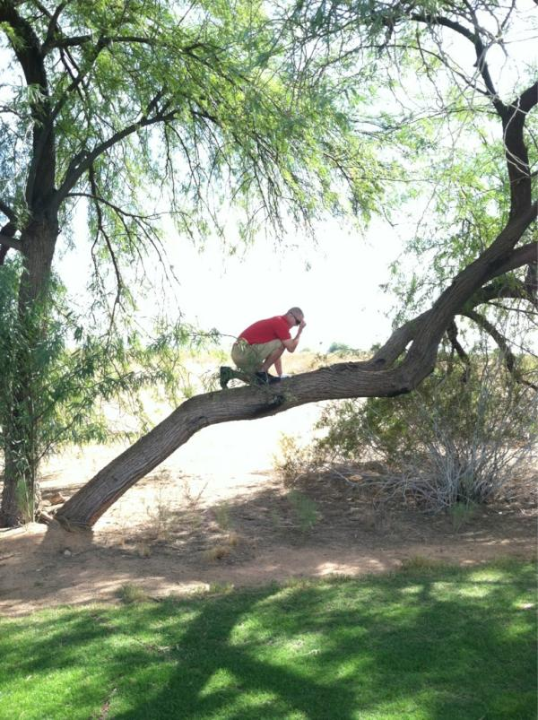 Trout Tebow Tree
