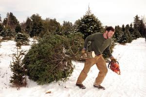 PPR christmas tree farm 2