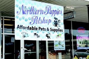 PPR Northern Puppies WEB
