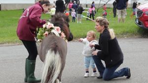 Pony Rides in Newtown
