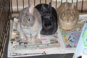 Rabbit rescue a reality in Queens 2