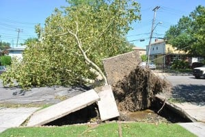 Irene takes its toll; trees down 1