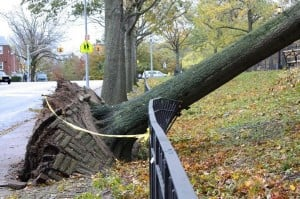 Hurricane Sandy leaves her mark on central and southwestern Queens