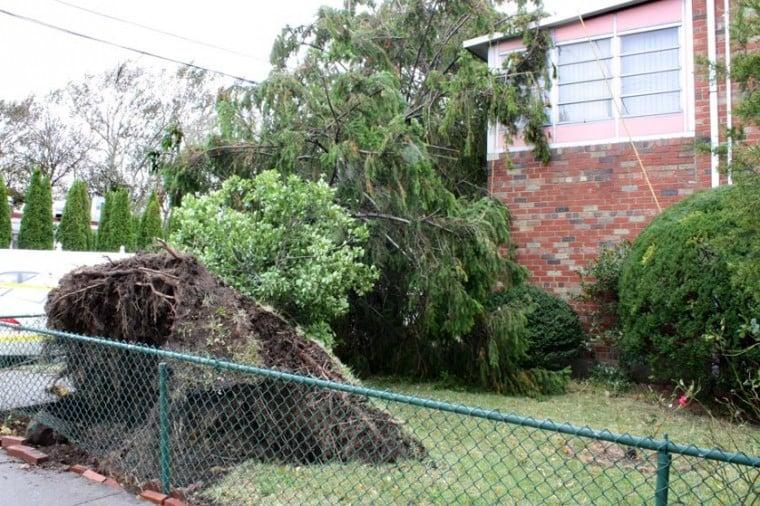 Parks still tackling Sandy-downed trees  1