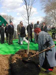 Planting Of Twelve Trees Brings Renewal To Woodside Cemetery