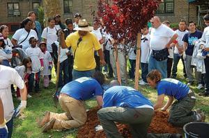 Volunteers plant 100 trees in LIC1