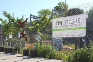 Tree giveaways set in Queens locations 1