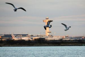 Feds remove geese from Jamaica Bay  2
