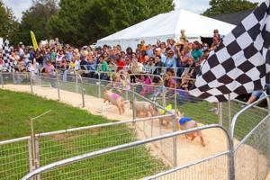 Family fun at county farm festival  1