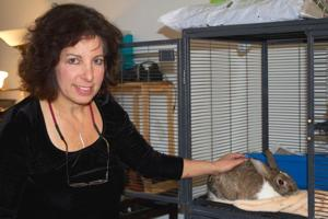 Rabbit rescue a reality in Queens 1