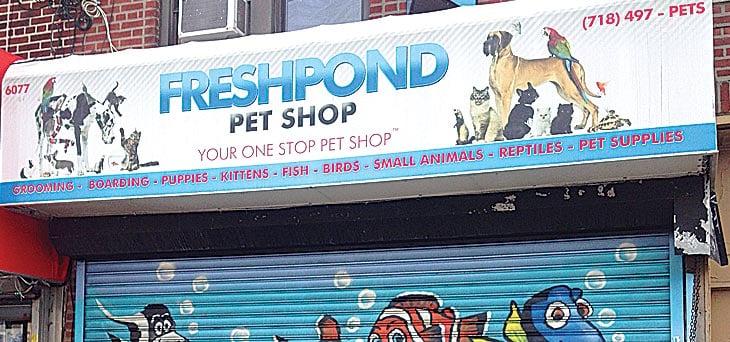 Maspeth pet shop animals removed 1