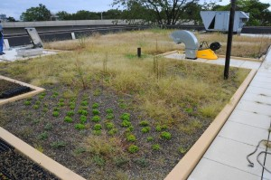 Queens gets a bit cooler with another green roof 1