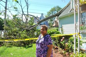 Irene takes its toll; trees down 2