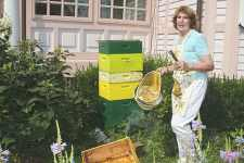 Bee-lievers receive sweet news from city