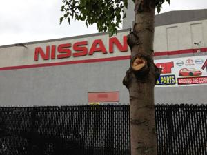 Star Nissan hacks away at its trees 1