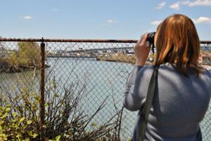 Birdwatching in an industrialized area 1
