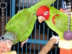 Embattled Parrot Haven Finds New Maspeth Home