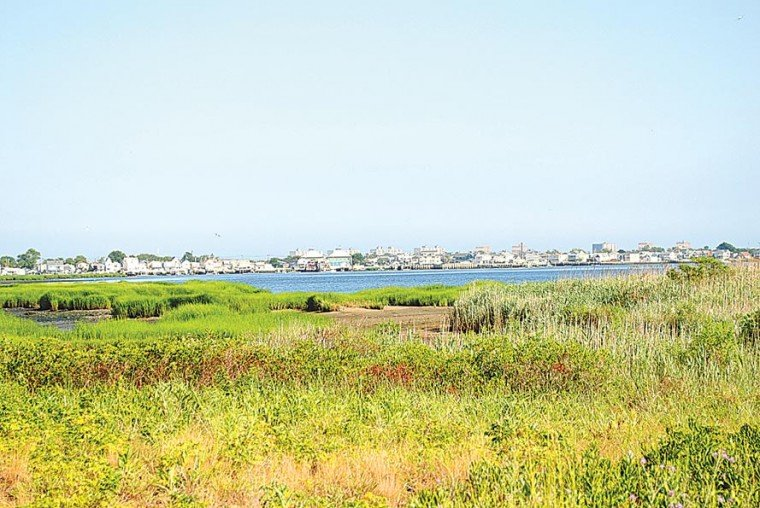 Rename Jamaica Bay? Greens say no 1