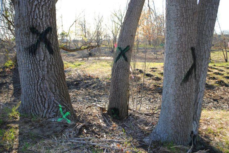 Tree tagging sparks JFK runway rumors 1