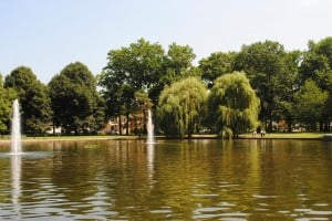 Algae still infests Bowne Park pond 1