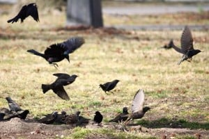 Birds in flight — avian delight
