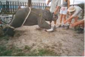 Should exotic animals be banned from the circus?