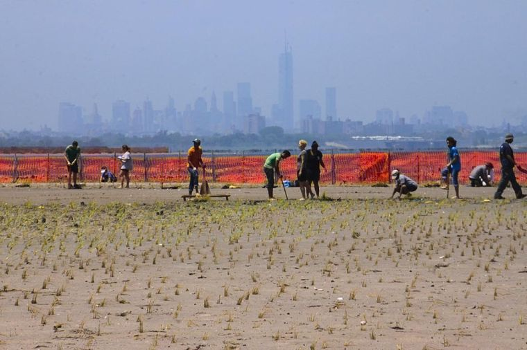 Bringing marshland back to Jamaica Bay 1