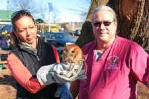 Wise young owl cleared for takeoff in Douglaston 