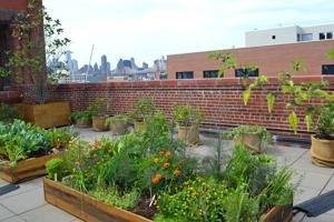 PS1 offers a healthy rooftop option 2