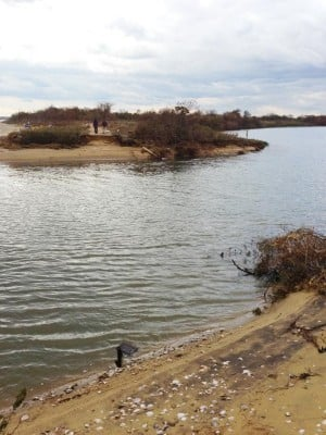 Jamaica Bay walloped by Hurricane Sandy 1