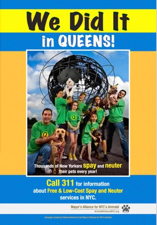 Queens campaign to  spay, neuter animals  1
