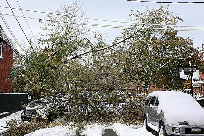 Parks still tackling Sandy-downed trees  2