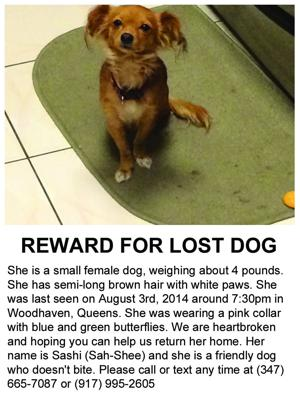 Big reward offered for little dog lost in Queens