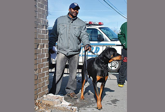 Dogs come in from the cold in Jamaica 1
