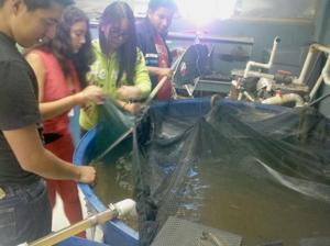 Bowne HS students raise trout, tilapia 1