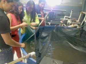 Bowne HS students raise trout, tilapia 1