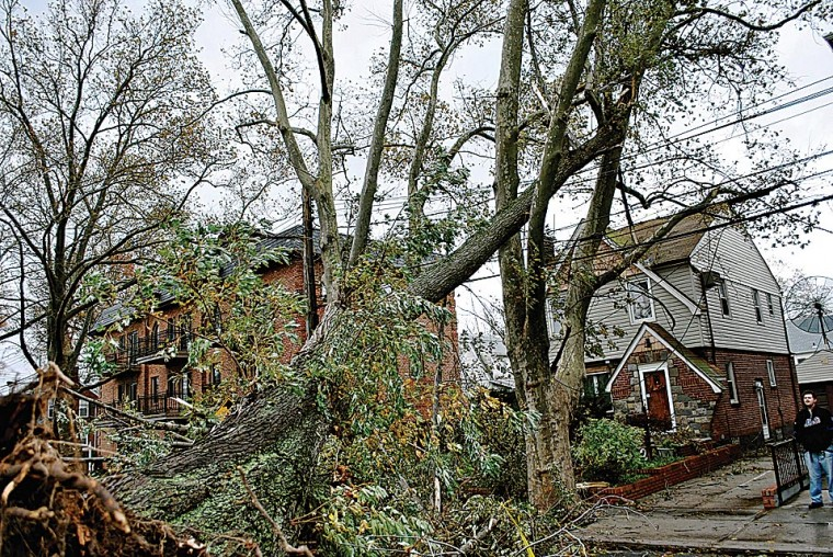 Sandy tree debris will be recycled 1