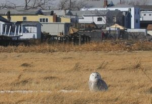 Broad Channel hears a hoot 1