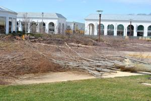 Trees get cut down for new mall plaza 1