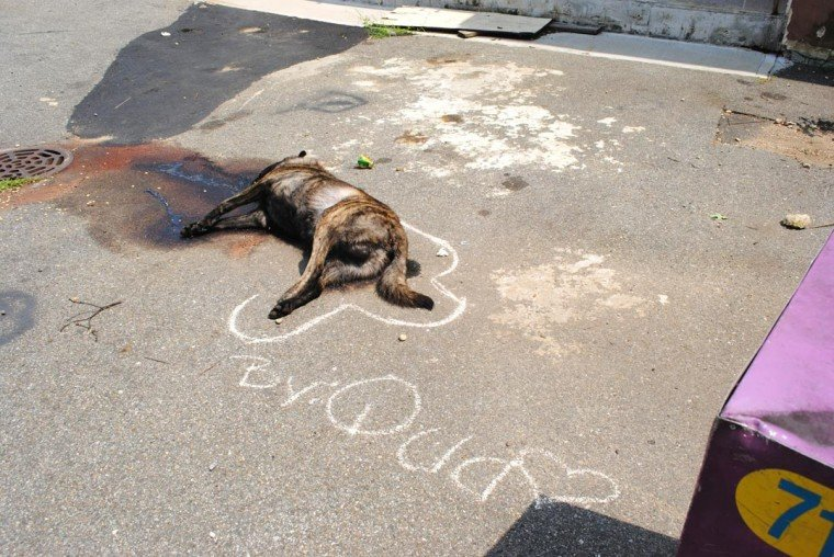 Dead dog left to rot in a Jamaica park 1