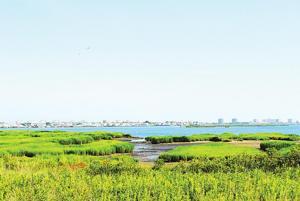 Restoring wetlands in Jamaica Bay 1