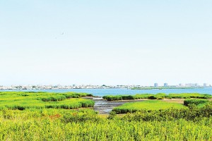Restoring wetlands in Jamaica Bay 1